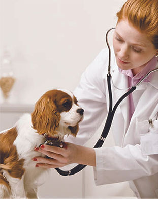 Veterinnário.jpg