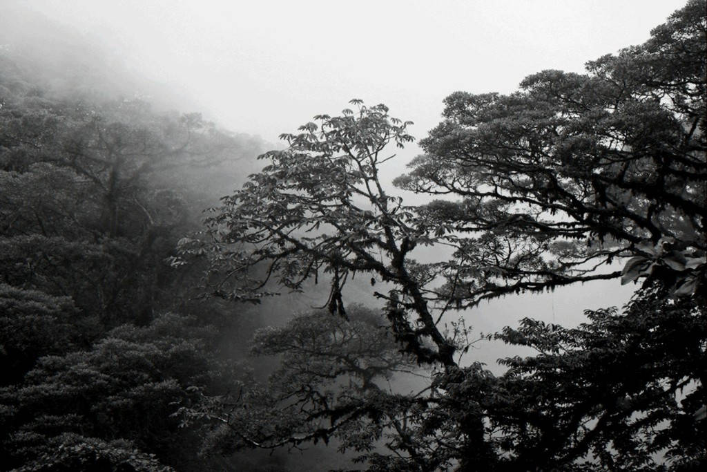 JAVIER HINOJOSA 6 (2009).jpg