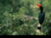 Hornbill.jpeg