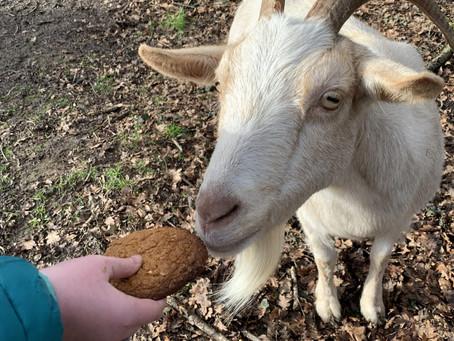 Happy Birthday Yoghurt!