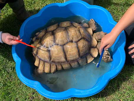Bath time for the tortoise
