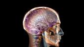 Por que nossos QIs nunca estiveram tão altos - mas nem por isso somos mais espertos