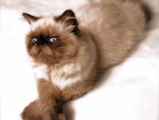 Feline Healthcare