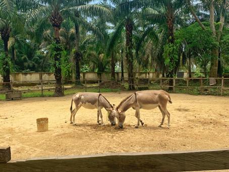 Lufasi Nature Park