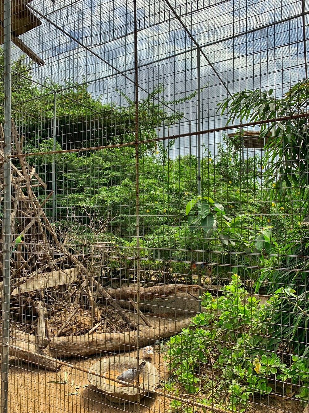 Aviary at greenfingers conservation