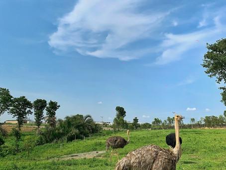 Almat farms, Abuja