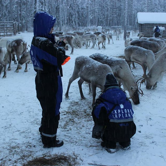 Come and meet our reindeer.jpg