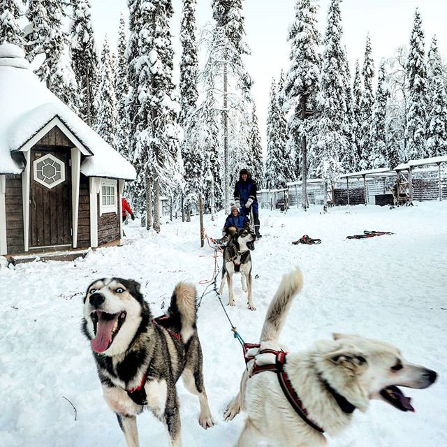 We are so happy that our husky tours hav