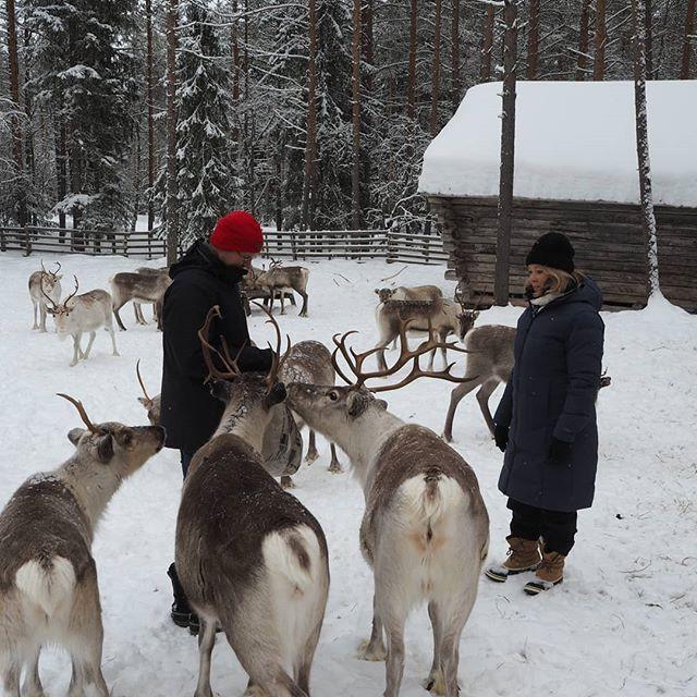 Our Reindeer farm and 7km husky safari h
