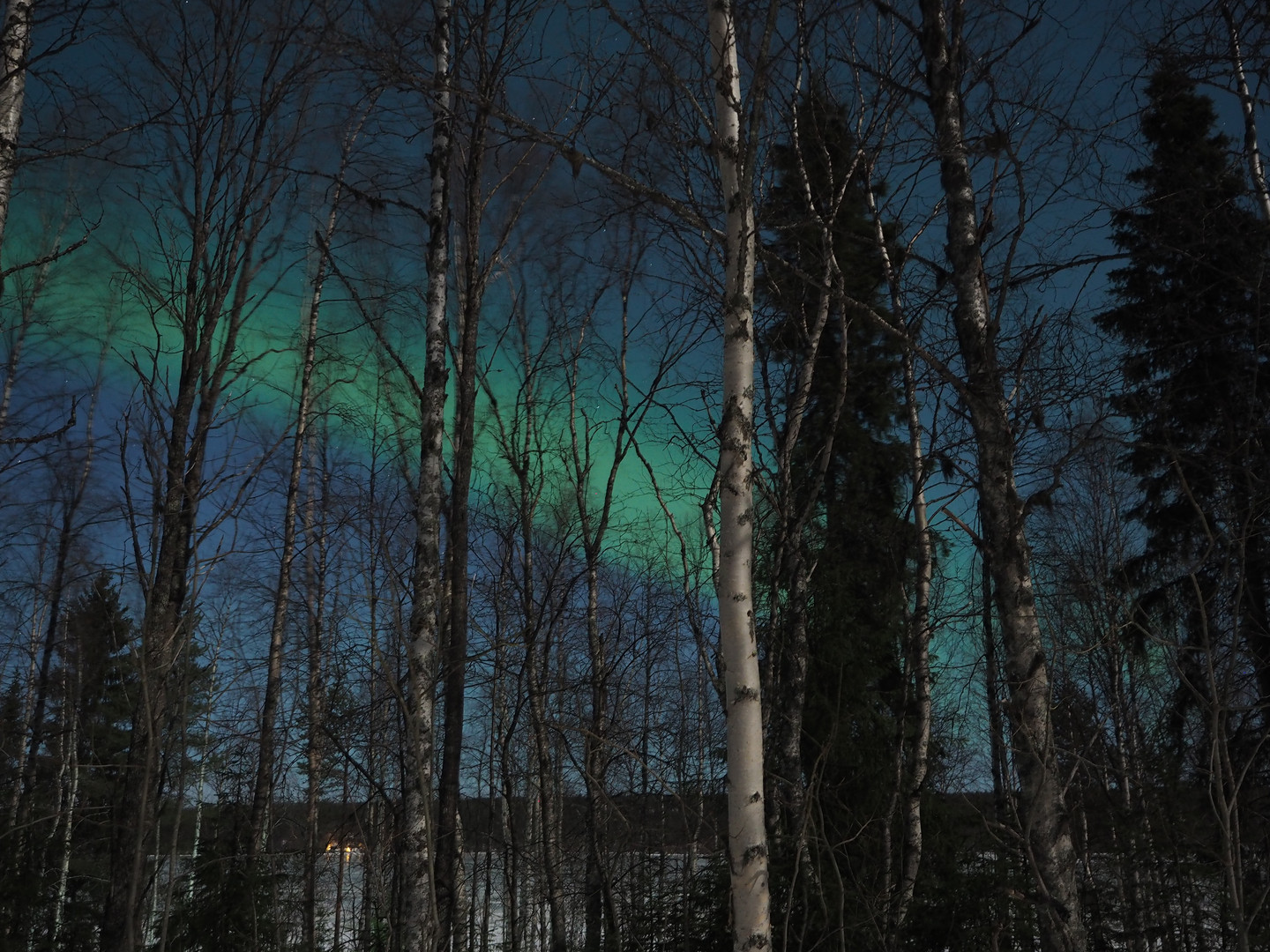 Northern Lights through the forest.