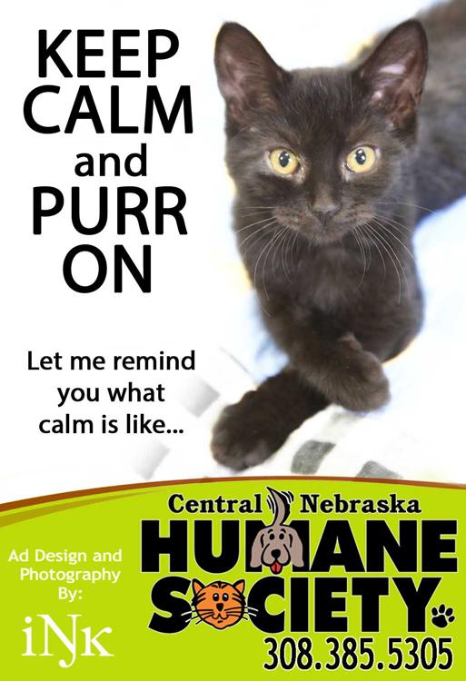 Humane-Society-Ad-_-PURR-ONa