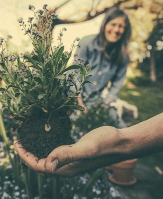 Tree Planting Breckenridge 5