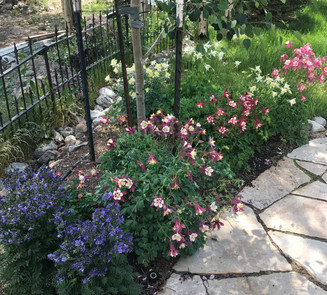 Flower Boxes & Containers 18