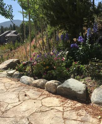 Tree Planting Breckenridge 4