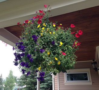 Flower Boxes & Containers 1