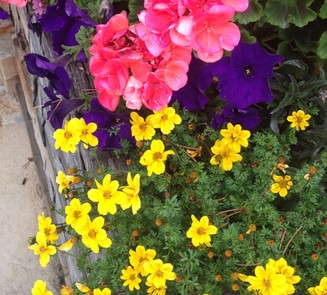 Flower Boxes & Containers 21