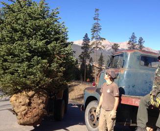 Tree Planting Breckenridge 1