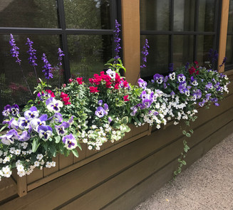 Flower Boxes & Containers 14