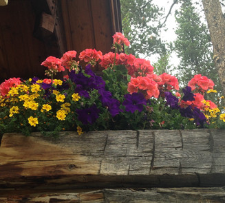Flower Boxes & Containers 19