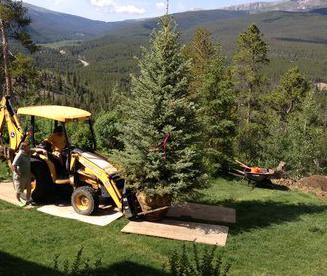 Tree Planting Breckenridge 2