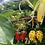 Thumbnail: Summer Fruit Collection