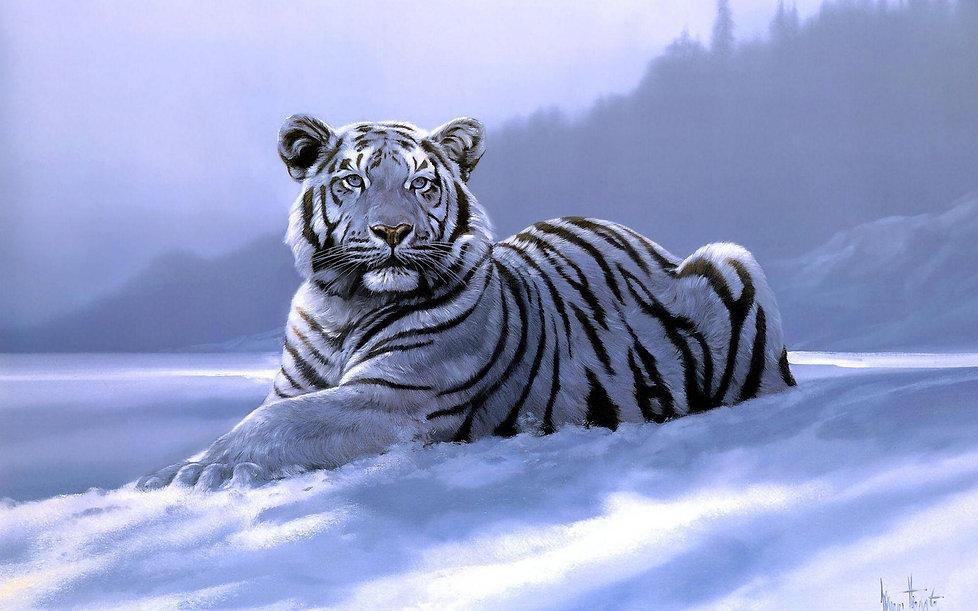 siberian tiger.jpg