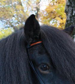 Stirnband aus Leder, färbig eingelegt