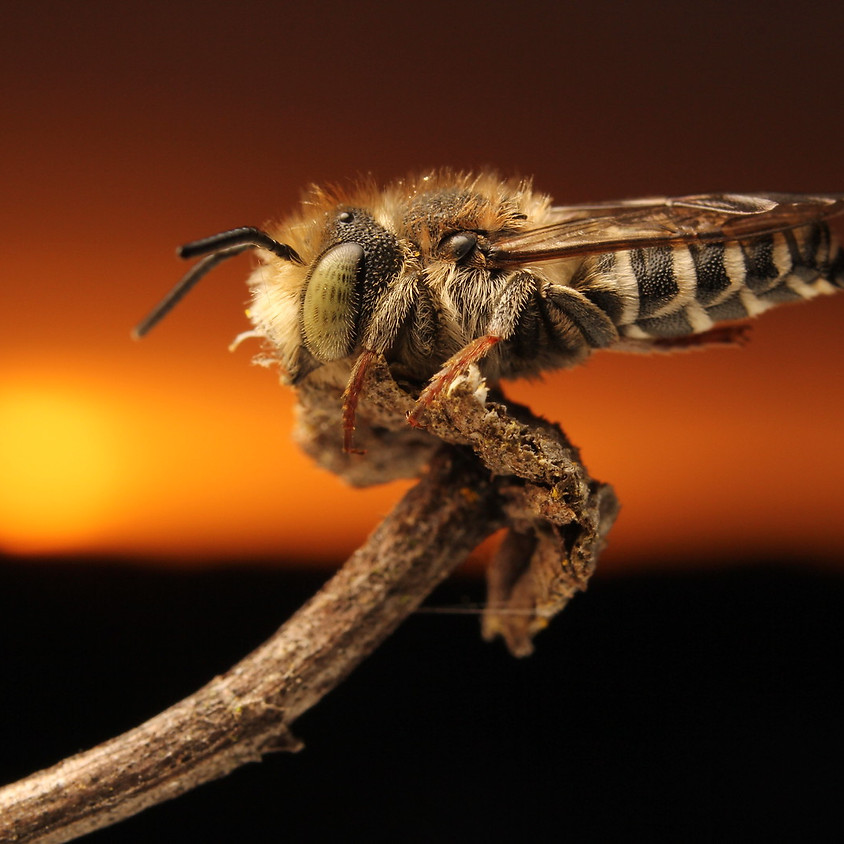 Communing with the Bees: Beginner Macrophotography