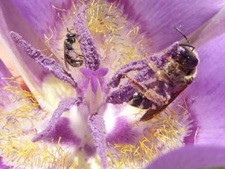 Iris Bitterlich