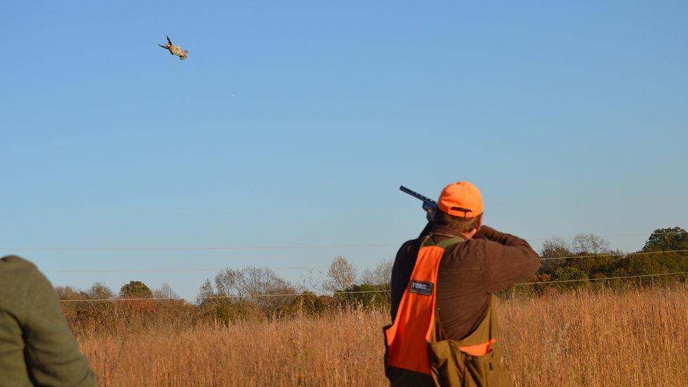 Deposit 60 Bird Quail Hunt