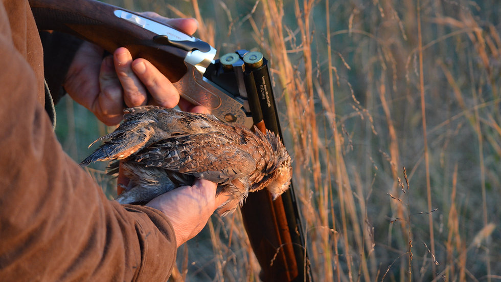 Deposit 40 Bird Quail Hunt