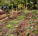 Agroforestry image 1_edited.jpg
