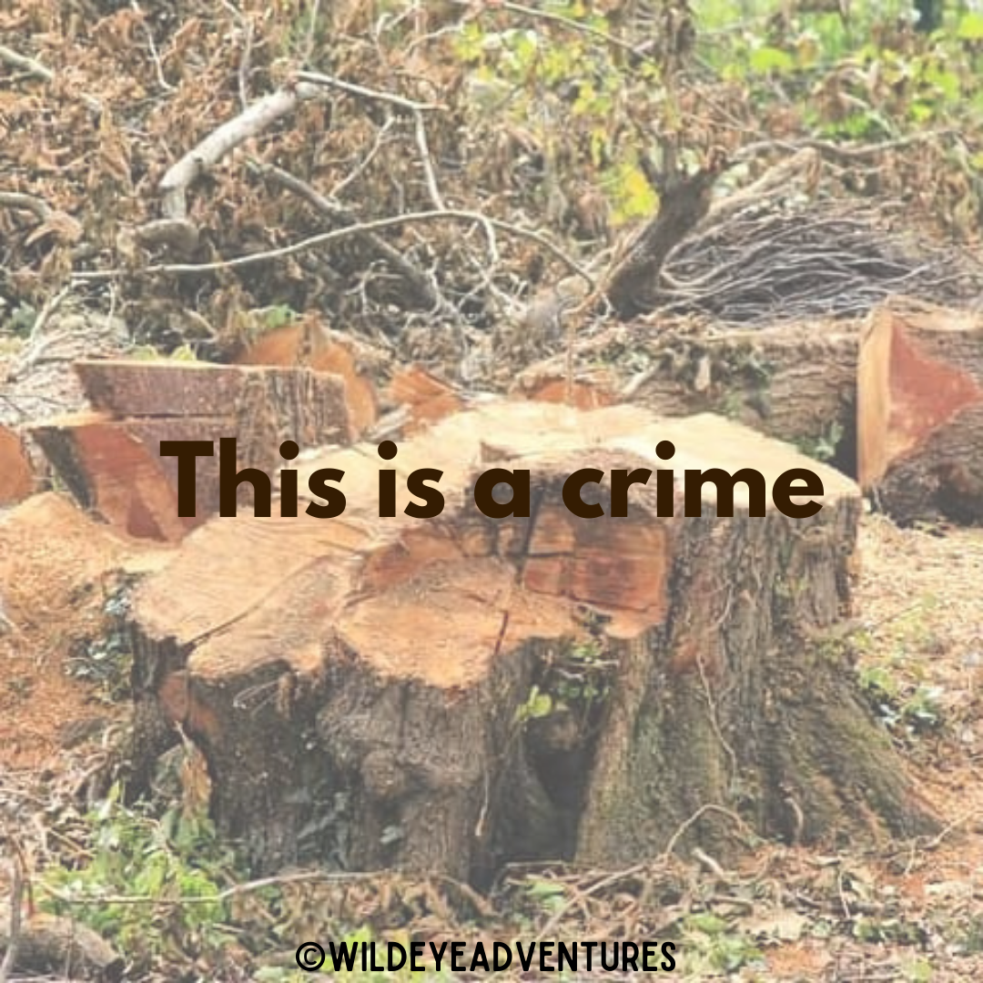 Tree Crime.png