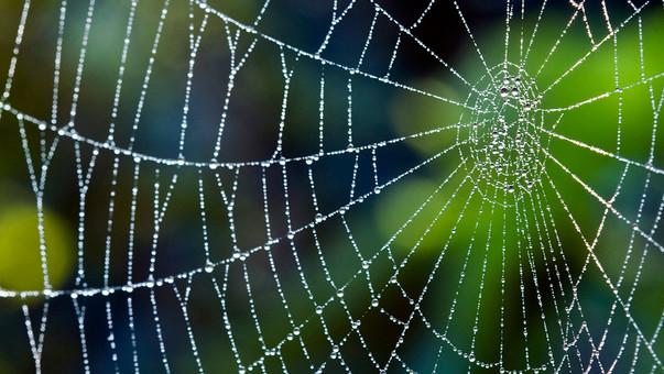 Spinnenbehandeling