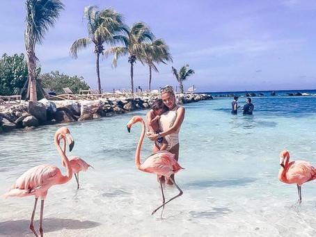 The Flamingos in Aruba