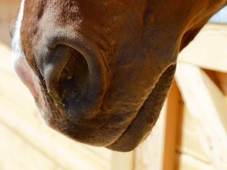 Horse Nose.jpg