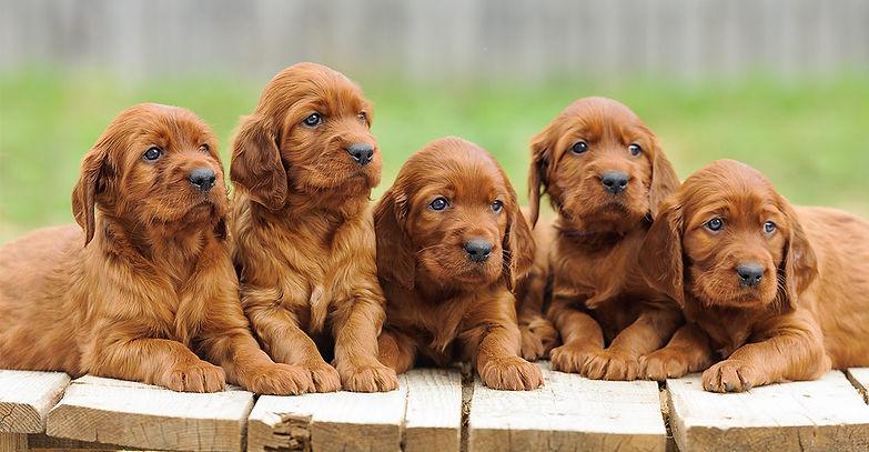 puppy-training-stages-header.jpg