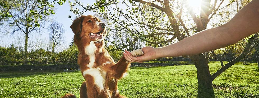 major-benefits-of-dog-training.jpg