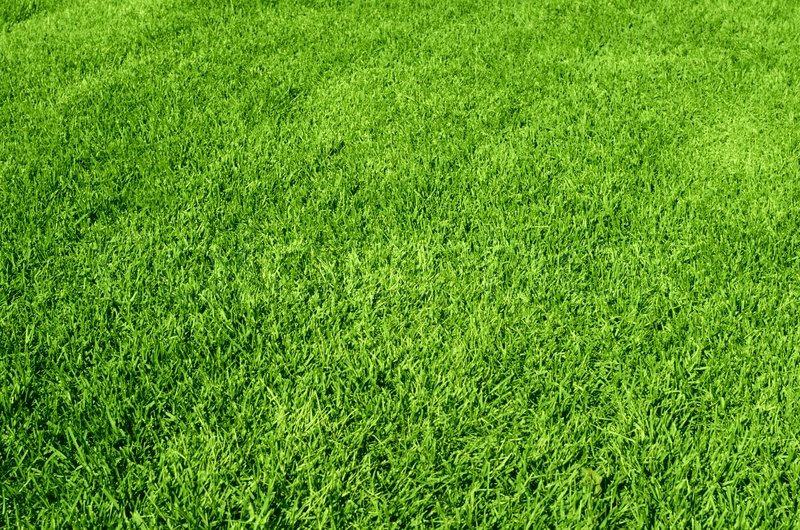 Green Lawn 2.jpg