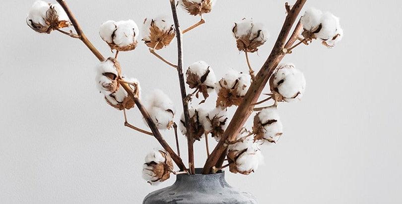 CottonLove