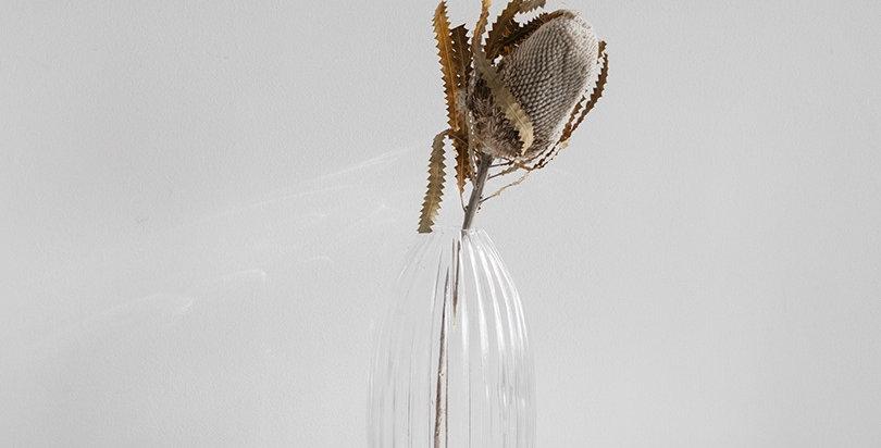 Dry Protea