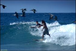 Surfing Havana Waves