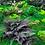 Thumbnail: Kit mur végétal coloré