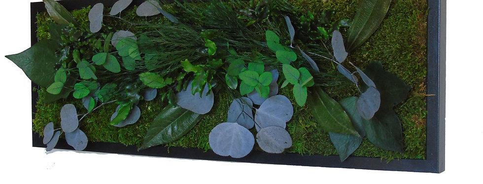 Tableau eucalyptus 50 x 23
