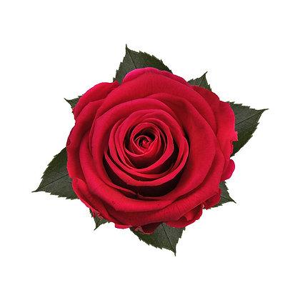 9 Roses Kiara rouge