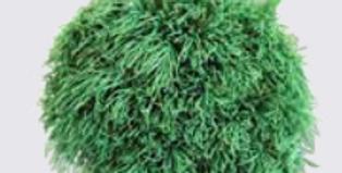 green ball vert