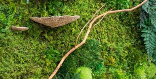 kit mur vegetal champignon