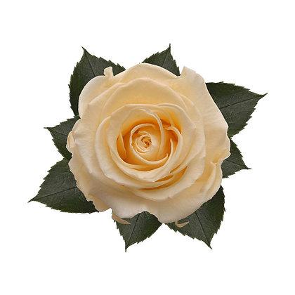 9 Roses kiara jaune