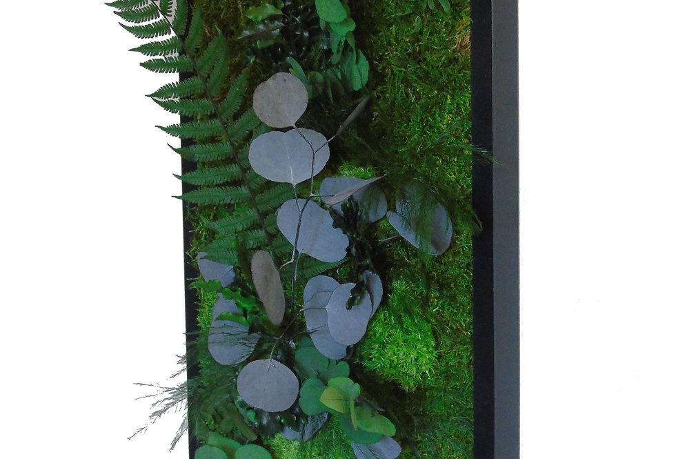 Tableau eucalyptus 50 x 23 PRO