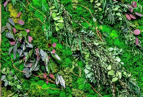 kit mur vegetal eucalyptus